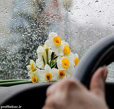 زیباترین عکس گل نرگس برای پروفایل